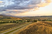 aerial view taken of the iconic cypresses of San Quirico during a warm summer sunset, Unesco World Heritage Site, municipality of San Quirico d'Orcia, Siena province, Tuscany district, Italy, Europe