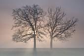 Turin province, Piedmont,Italy, Europe. Magic winter sunrise in the Piedmont plain