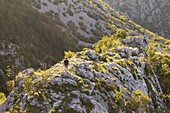 Hiker descends along the ridge that slopes down from Cippo Comici, Rosandra Valley, Trieste province, Friuli Venezia Giulia, Italy.