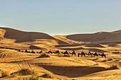 North Africa,Africa,African,Morocco,Drâa-Tafilalet,al-Rashidiyya,merzouga. Desert camel caravan