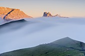 Fog over cows grazing at feet of  Cime di Terrarossa, Molignon and Palacia at dawn, Seiser Alm, Dolomites, South Tyrol, Italy