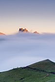 Cows in green meadows at feet of Cime di Terrarossa emerging from fog, aerial view, Seiser Alm, Dolomites, South Tyrol, Italy
