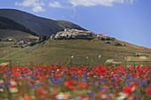 Castelluccio di Norcia during lentils flowering, Umbria, Italy, Southern Europe
