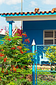 Detail of a blue house and red flowers in Viñales, Cuba