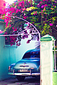 Classic car parked under bougainville tree