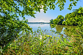 Fish pond near Budweis, South Bohemia, Czech Republic