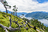 Pine and dead trees on the Traunstein and view of the Traunsee in the Salzkammergut, Upper Austria, Austria