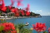Waterfront seen through red flowers, Rabac, Istria, Croatia, Europe