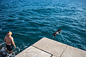 Dog jumps into the water from the beach promenade, Zadar, Zadar, Croatia, Europe