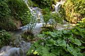 Aquatic plants in a pool with waterfalls behind, Plitvice Lakes National Park, Lika-Senj, Croatia, Europe