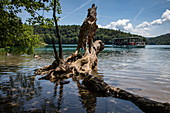 Tree trunk in the water and excursion boat with tourists, Plitvice Lakes National Park, Lika-Senj, Croatia, Europe