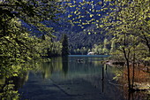 Seewirt, Thumsee, Bad Reichenhall, Berchtesgadener Land, Upper Bavaria, Bavaria