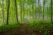 Sonniger Frühlingsmorgen im Buchenwald, Bayern, Deutschland, Europa