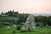 Blooming apple trees on lush spring meadow with Drachenburg Castle at sunset, Koenigswinter, North Rhine-Westphalia, Germany, Europe