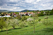 Apple trees in full bloom on a lush meadow with a view of the city in spring, Schöllkrippen, Kahlgrund, Spessart-Mainland, Franconia, Bavaria, Germany, Europe