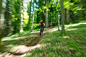 Zoomed picture of a mountain biker on a rapid ride through the forest in spring, Wertheim, Spessart-Mainland, Franconia, Baden-Wuerttemberg, Germany, Europe