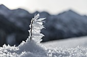 Ice crystal macro in snowy winter landscape in front of mountain panorama, Germany, Bavaria, Oberallgäu, Oberstdorf