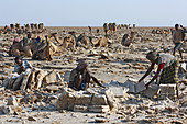 Äthiopien; Region Afar; Danakil Wüste; Danakil Senke; Arbeiter auf den Salzpfannen; lösen und bearbeiten der Salzplatten in mühevoller Handarbeit