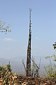 Ethiopia; Southern Nations Region; southern Ethiopian highlands; Generational stake in a Konso village; a new stake is erected every 18 years; Cultural landscape of the Konso