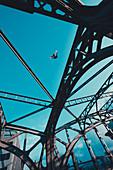 Pigeon over the Hackerbrücke in flight, Munich, Germany