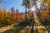 Forest path at Weitsee in autumn, Chiemgau, Bavaria, Germany