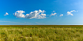 Reed grass and sky on the dike of the island of Foehr, North Frisia, Germany