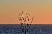 Branches of a dead tree and a view of the sea at dusk, Grimsholmen, Halland, Sweden