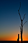 Sunset between the branches of a dead tree on the Baltic Sea, Grimsholmen, Halland, Sweden