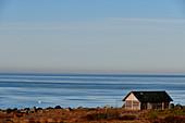 Lonely fishing hut in the morning light by the sea at Grimsholmen, Hallandslan, Sweden