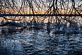 View of icy branches on the shore of Ammersee, Fünfseenland, Upper Bavaria, Bavaria, Germany, Europe