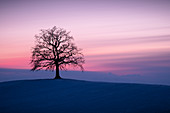 A leafless tree on a hill at sunset in winter, Münsing, Upper Bavaria, Bavaria, Germany, Europe