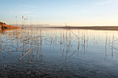View of the Ammersee and the Alps, in the foreground reeds in the water, Fünfseenland, Upper Bavaria, Bavaria, Germany, Europe