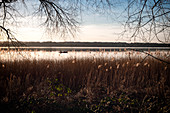 View of the Ammersee, in the foreground reeds, Fünfseenland, Upper Bavaria, Bavaria, Germany, Europe