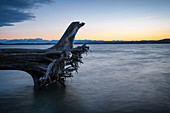 View of the Ammersee with the Alps in the background, left the root of a tree trunk, Fünfseenland, Upper Bavaria, Bavaria, Germany, Europe