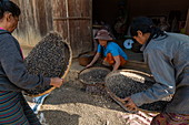 Three women shaking baskets of beans, Ban Hoy Palam, Pak Tha District, Bokeo Province, Laos, Asia