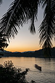 Silhouette of palm fronds and longtail tour boat on Mekong River at sunset, Luang Prabang, Luang Prabang Province, Laos, Asia