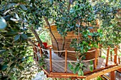 France, Bouches du Rhone, Cassis, provencal tree house