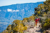 France, Reunion island, Cilaos, hikers close to the Caverne Dufour moutain hut, Piton des Neiges moutain hut, listed as World Heritage by UNESCO