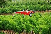France, Var, Dracenie, Taradeau, grape harvest at Saint Martin's Castle, AOC Cotes de Provence, parade of vintage cars