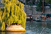 France, Paris, the banks of the Seine classified UNESCO, the Ile de la Cite
