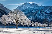 Winter avenue with Neuschanstein Castle, Schwangau, Allgäu, Bavaria, Germany
