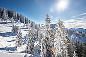 Verschneiter Winterwald am Tegelberg im Ammergebirge, Schwangau, Allgäu, Bayern, Deutschland