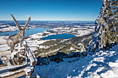 Carved ibex at the Tegelberghaus (1,707 m) with a view of the Forggensee, Schwangau, Allgäu, Bavaria, Germany