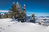 Snow-covered winter forest at Tegelberg in the Ammer Mountains, Schwangau, Allgäu, Bavaria, Germany