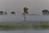 Morgenstimmung im Nebel am Fluss, Cooinda, Kakadu National Park, Northern Territory, Australien