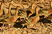 A group of birds in the mud on the riverside, Cooinda, Kakadu National Park, Northern Territory, Australia
