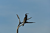 A bird sits on a dead tree, Cooinda, Kakadu National Park, Northern Territory, Australia