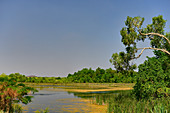 A lake on the Ord River with tropical vegetation, Kununurra, Western Australia, Australia