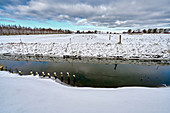 Snow-covered dike landscape, Dorum, Lower Saxony, Germany