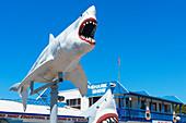 Great White Shark Expo shark show, Hervey Bay, Queensland, Australia